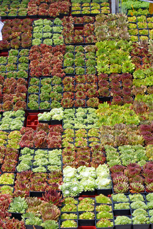 Selling flowers and plants on a flower market