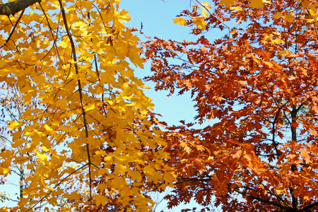 Colourful autumn leaves infront of the sky Stock Photo