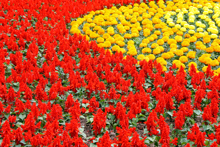 Red and yellow flowers, background Stock Photo