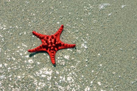 Beautiful red starfish in shallow water