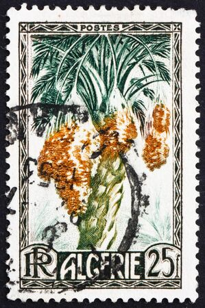 ALGERIA - CIRCA 1972: a stamp printed in Algeria shows dates on date palm, phoenix dactylifera, edible sweet fruit, circa 1972