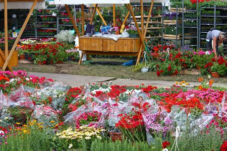 ZAGREB, CROATIA - JUNE 4, 2011: Exhibition sale of flowers, Floraart International Garden Exhibition, Zagreb, Croatia 新聞圖片