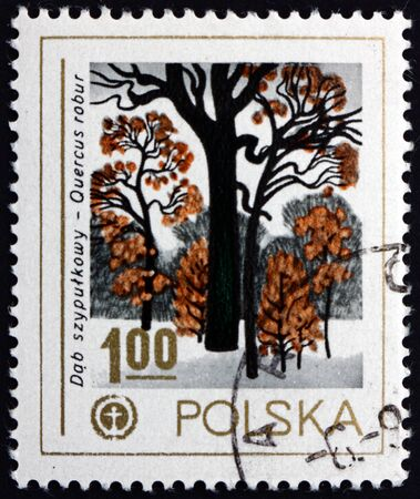 POLAND - CIRCA 1978: a stamp printed in Poland shows common oak, quercus robur, a tree native to Europe, circa 1978