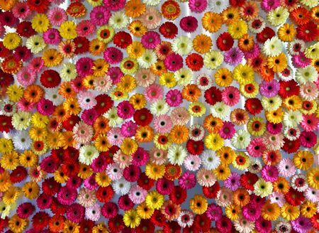 ZAGREB, CROATIA - MAY 18, 2019: Wall of flowers, garden decoration exposed on Floraart, 54. International Garden Exhibition, Zagreb, Croatia 新聞圖片