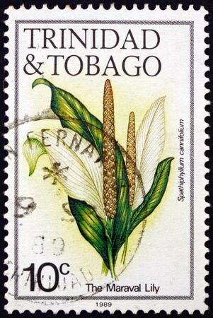 TRINIDAD AND TOBAGO - CIRCA 1983: a stamp printed in Trinidad and Tobago shows maraval lily, spathiphyllum cannifolium, flowering plant native to tropical regions of the Americas, circa 1983 新聞圖片