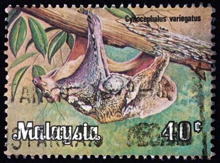 MALAYSIA - CIRCA 1979: a stamp printed in Malaysia shows Sunda flying lemur, galeopterus variegates, is a species of colugo, found in Southeast Asia, circa 1979