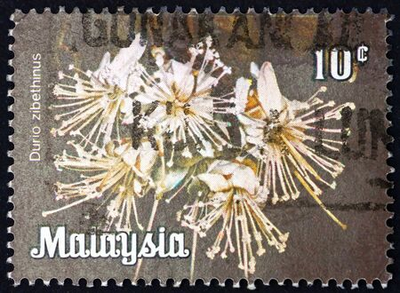 MALAYSIA - CIRCA 1979: a stamp printed in Malaysia shows durian, durio zibethinus, is the most common tree species in the genus durio, circa 1979 新聞圖片