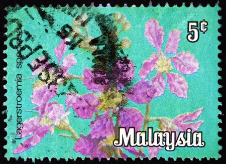 MALAYSIA - CIRCA 1979: a stamp printed in Malaysia shows giant crepe-myrtle, lagerstroemia speciosa, is a species of lagerstroemia native to tropical southern Asia, circa 1979