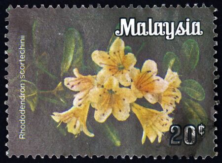 MALAYSIA - CIRCA 1979: a stamp printed in Malaysia shows rhododendron scortechinii, is a species of rhododendron native to tropical southern Asia, circa 1979