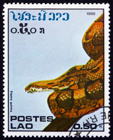 LAOS - CIRCA 1986: a stamp printed in Laos shows corn snake, elaphe guttata, is a North American species of rat snake found throughout the southeastern and central United States, circa 1986 Stok Fotoğraf