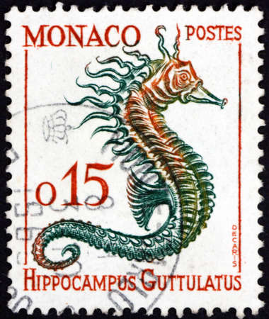 MONACO - CIRCA 1960 a stamp printed in Monaco shows long-snouted seahorse, hippocampus guttulatus, is a marine fish native from the northeast Atlantic, including the Mediterranean, circa 1960