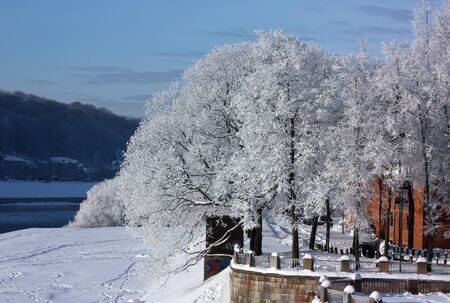 kaunas: Winter trees on river bank in the city of Kaunas Stock Photo
