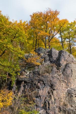 karlovy: Trees on a rock in Karlovy Vary
