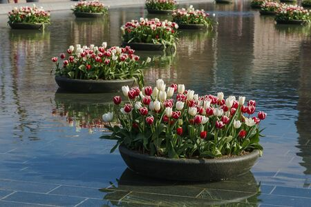 flowerbeds: Fountain with flowerbeds of tulips in Amsterdam, Netherlands Stock Photo