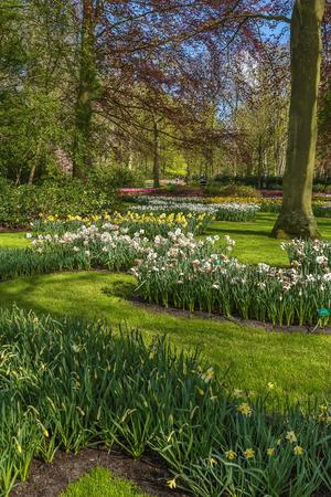 keukenhof: view of flowerbed in Keukenhof garden