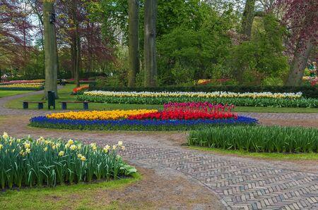 keukenhof: view of flowerbed in Keukenhof garden, Netherlands