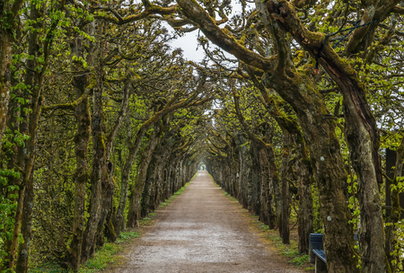 Alley in Hermitage park, Bayreuth, Germany Stock Photo