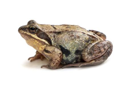 animal frog on white background close up Stock Photo