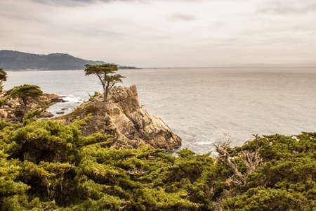 Lone Cypress Foto de archivo