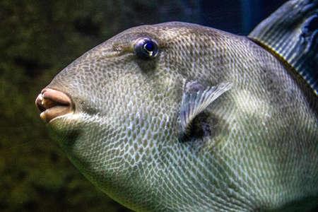 Diese Fische gibt es im Mittelmeer. Zu sehen waren diese Exemplare im Aquarium von Malta.