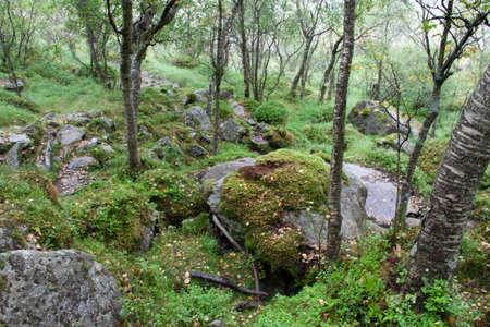 Selbst an einem verregneten Tag ist die Wanderung zum Manafossen Wasserfall in Norwegen ein Genuss. Standard-Bild - 108180607