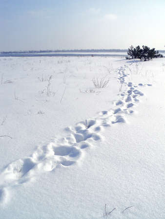 Snowy winter landscape on the banks of a frozen river. A lot of snow and tall white snowdrifts of snow. Footprints in the snow. Zdjęcie Seryjne