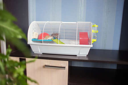 The cage for rodents costs in a furniture wall. Keeping of rodents in house conditions.