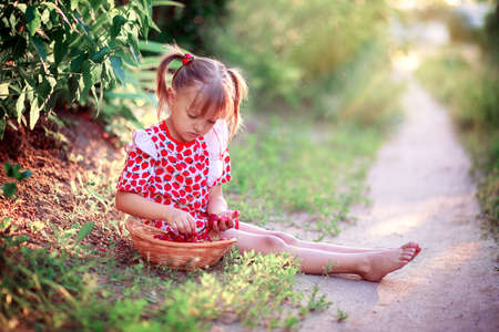 A little girl in a summer dress sits in a clearing and picks strawberries in a basket. Stok Fotoğraf
