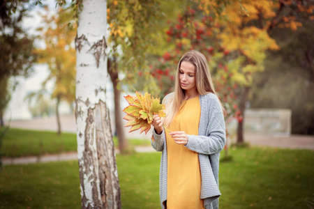 A beautiful girl in a gray cardigan walks through the city park and collects autumn maple leaves in a bouquet Reklamní fotografie