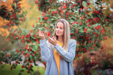 A young blonde girl in a gray knitted sweater walks in the autumn park and looks at red berries Reklamní fotografie