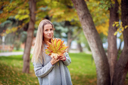 A beautiful girl in a gray cardigan walks through the city park and collects yellow maple leaves in a bouquet