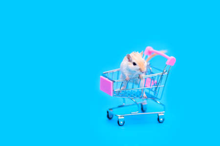 A Mongolian gerbil sits in a small shopping cart. Buying a pet. Hand rodents