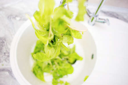 The process of washing green salad leaves in the home kitchen in the sink. Summer vitamins