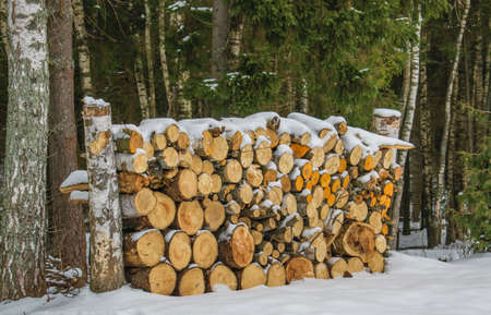 The pile of firewood prepared for winter