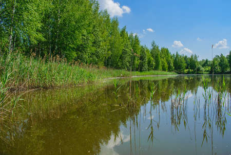 Forest lake on a Sunny summer day Stock Photo