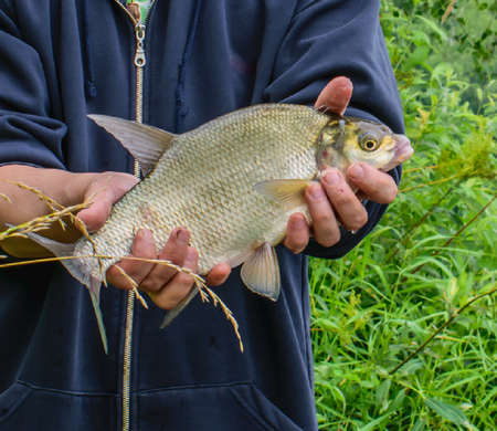 A fish caught in the hands
