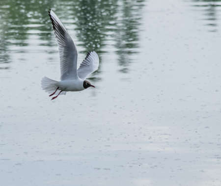 Flying bird over the water