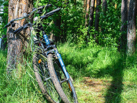 Two bicycles on a forest glade next to a tree