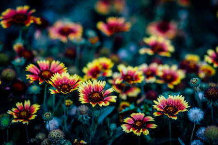 Variety of beautiful  colourful  fresh seasonal flowers in bloom like roses and sunflowers.