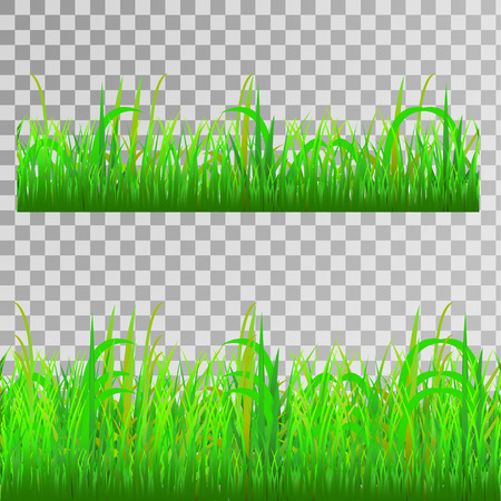 Green grass, seamless texture on transparent background, vector