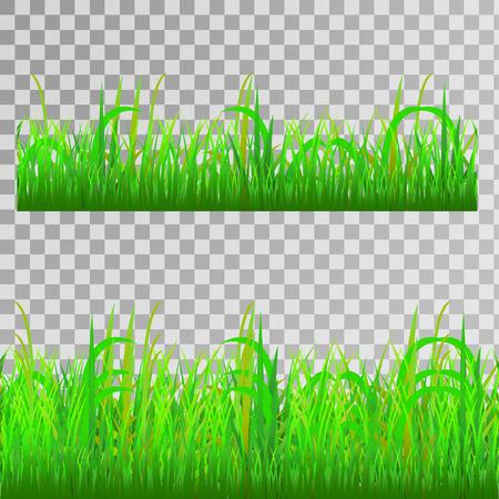 Green grass, seamless texture on transparent background, vector