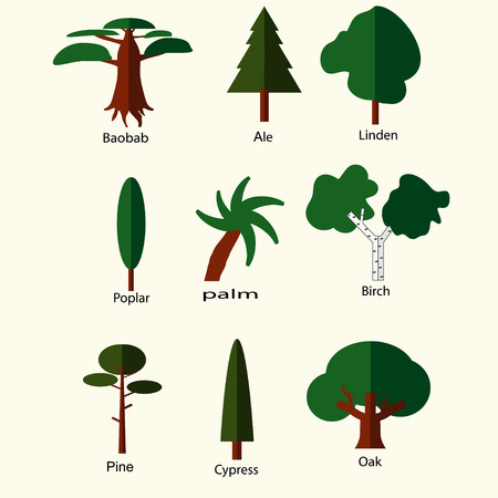 cypress: flat green trees icons set birch pine ale oak cypress baobab poplar palm linden  isolated on white. vector