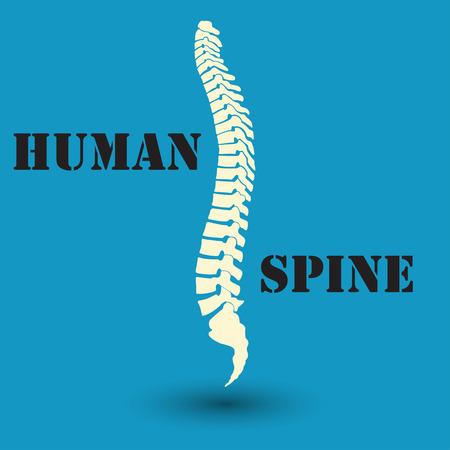 coccyx bone: Silhouette of a human spine, medicine, clinic symbol design, spine diagnostics center, flat design, vector