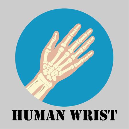 distal: muñeca humana emblema conjunta, diseño de la medicina clínica símbolo, articulaciones diagnósticos centro, logotipo diseño plano, vector