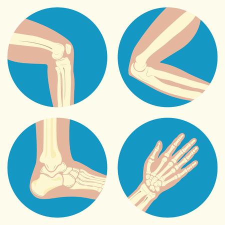 Conjunto de las articulaciones humanas, articulación de la rodilla, articulación del codo, tobillo, muñeca, el emblema o el signo del centro de diagnóstico médico o la clínica, diseño plano, vector