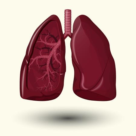 circulate: Human lungs emblem, Human lungs icon, Human lungs sign, Human lungs illustration, Human lungs cartoon style, medicine, clinic symbol flat design, cancer diagnostics center, vector Illustration