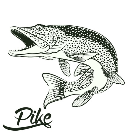 Monochrome illustration of jumping pike isolated on white background, vector