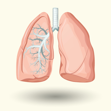 circulate: Human lungs, cartoon style illustration  isolated on white background Illustration