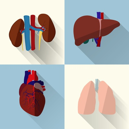 Human organs set Illustration