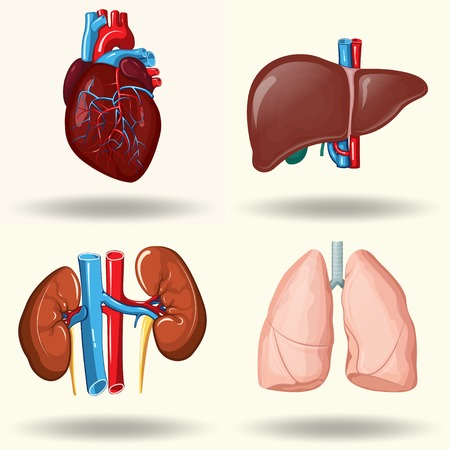 Human organs set Ilustracja